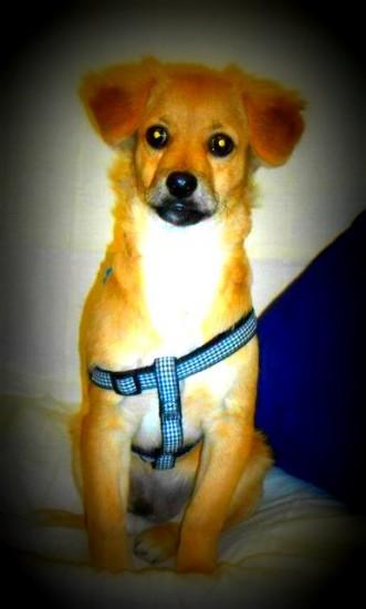 Ο σκύλος-θεραπευτής Σπίθας