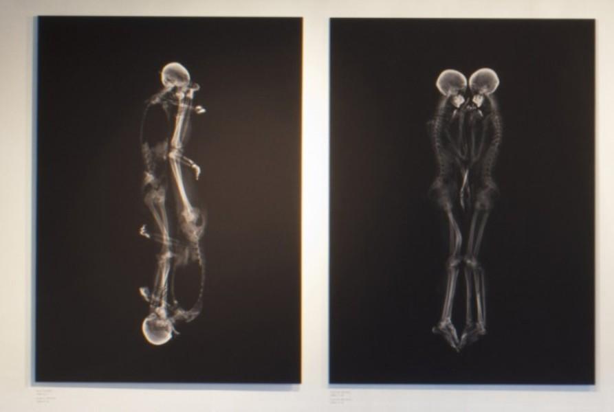 MCJDA-x-ray-portrait-4-648x435