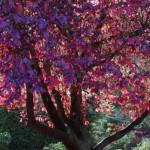 autumn-color-purple