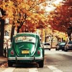 autumn-colors-orange-green