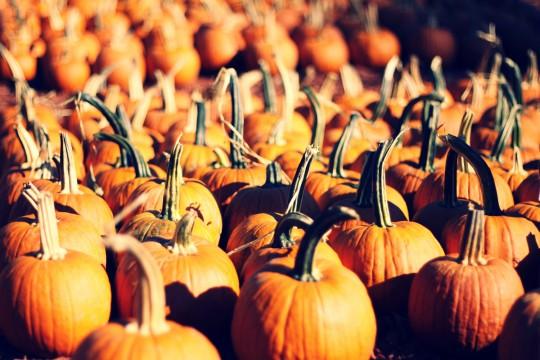 orange-pumpkin-colors