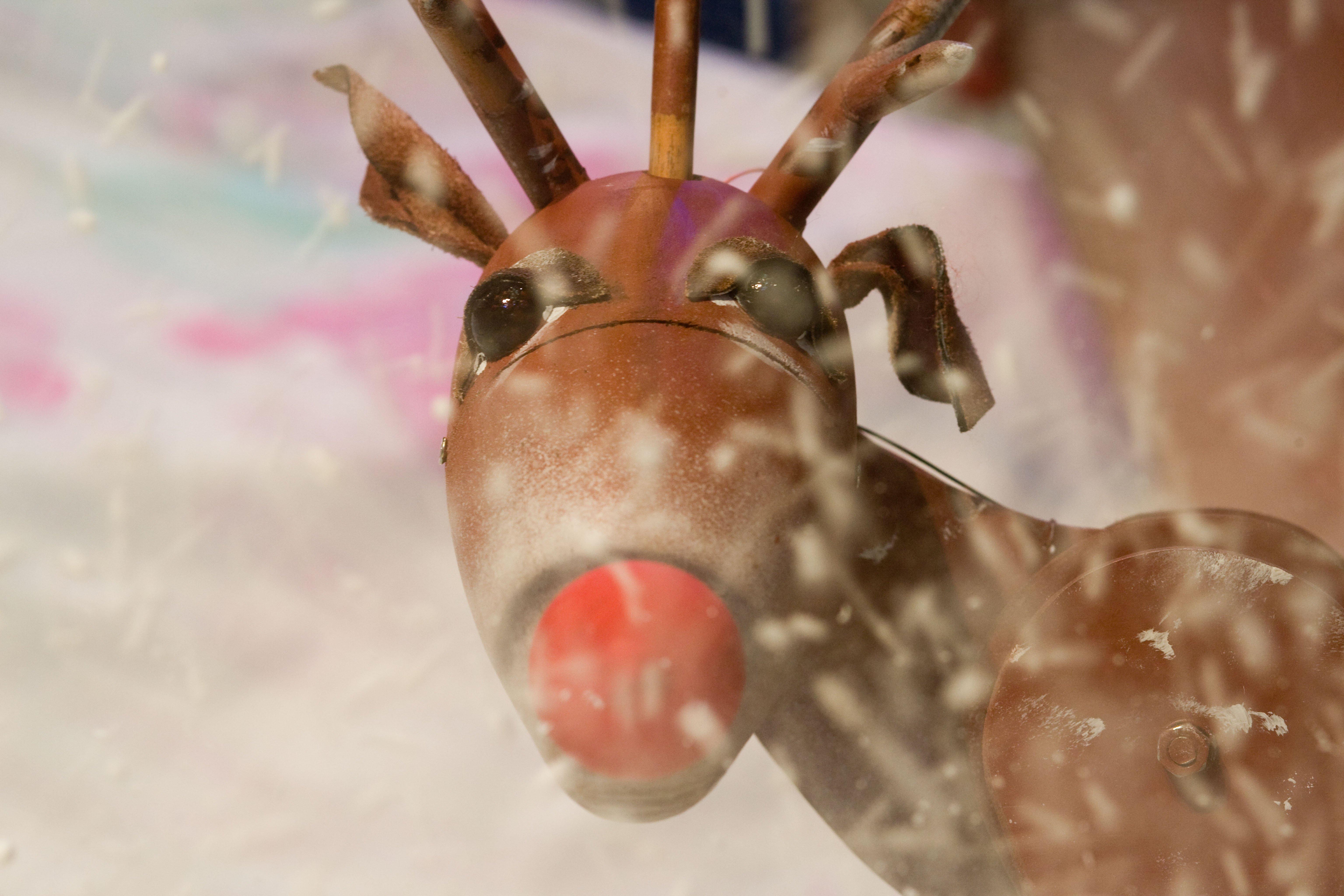 Rudolf-in-the-snow