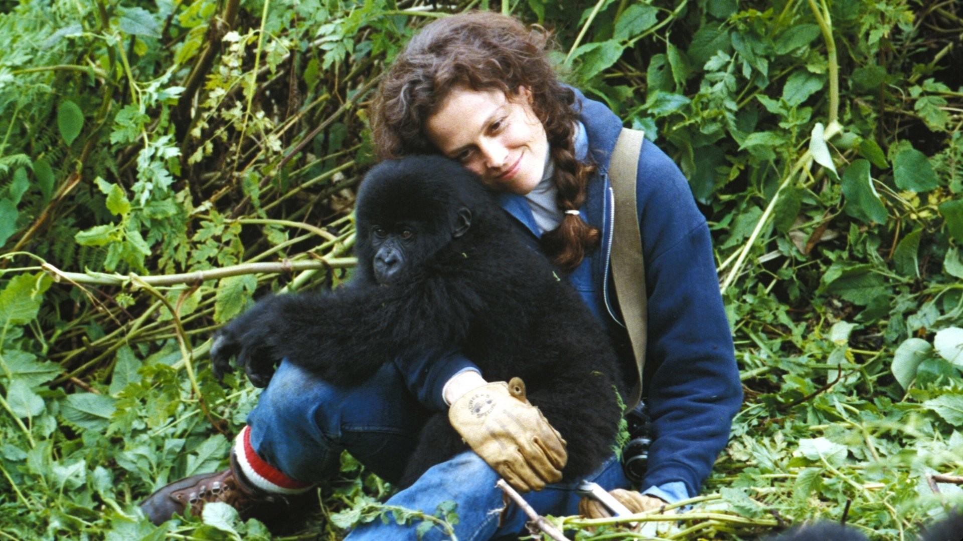 gorillas-in-the-mist2