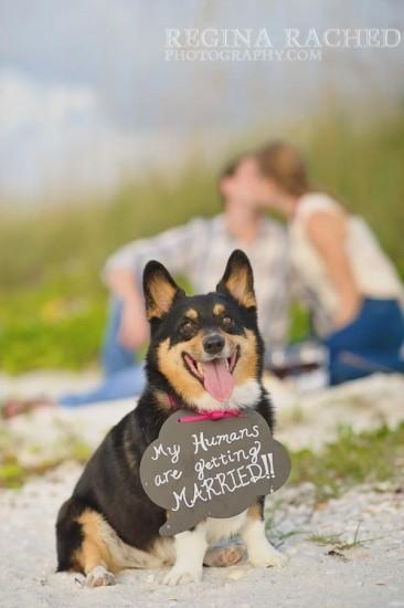 dog-wedding-save-the-date