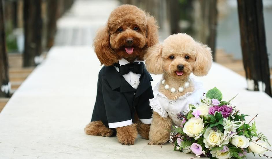 dog_sitter_matrimonio_2