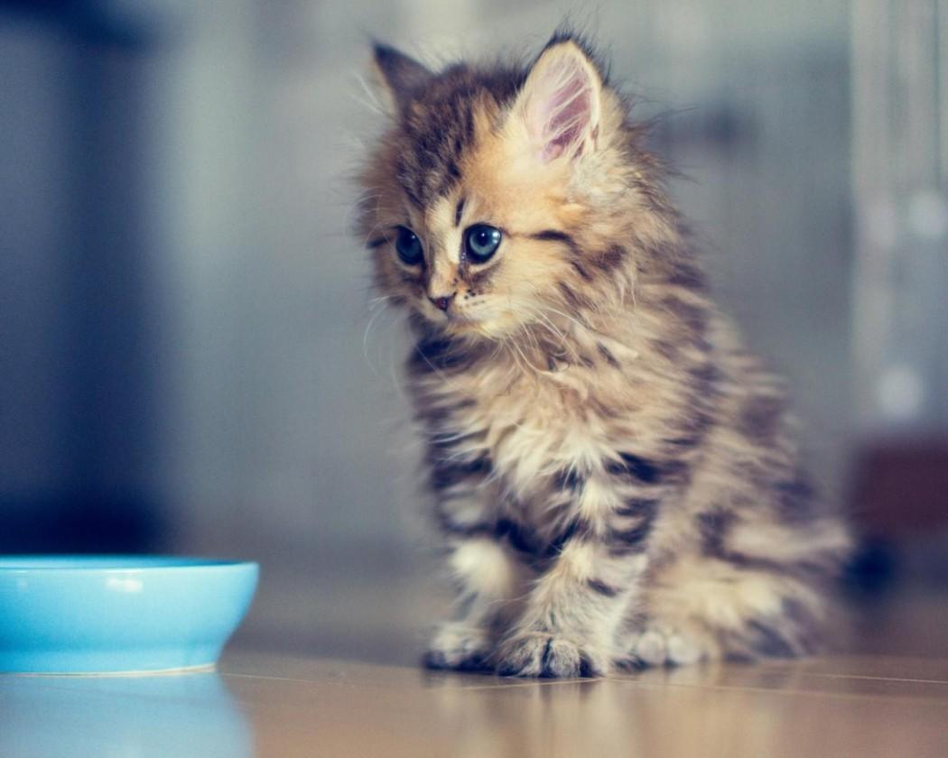 top-10-cutest-kitten-gif-we-opened-pandoras-box.56091