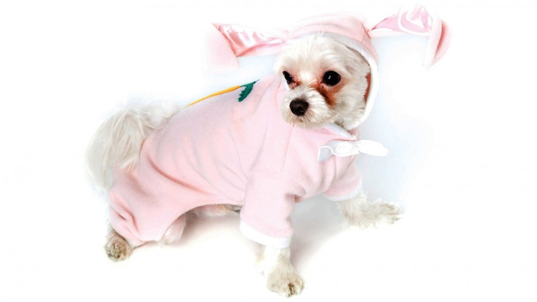 Easter Bunny Costume For Dogs Wallpaper