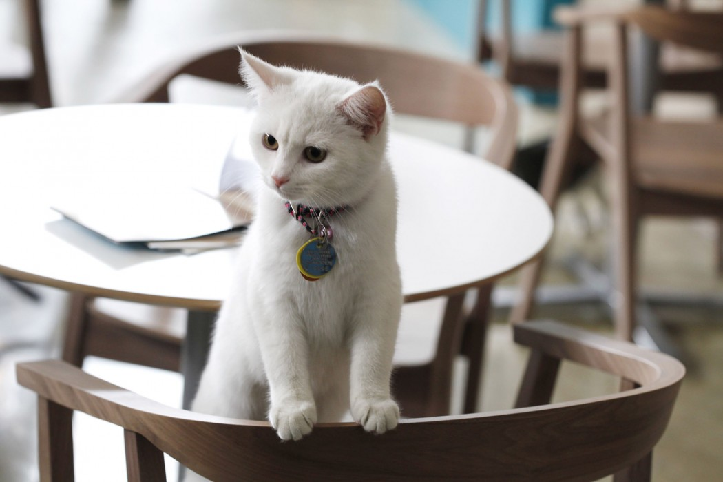 Cat Cafe by Purina ONE