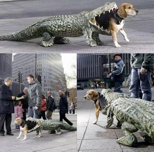 1-awesome-dog-alligator-costume