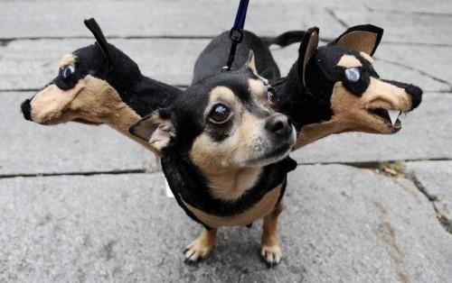 10-three-headed-dog-costum