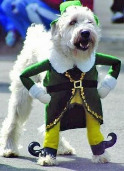 11-dog-dressed-as-buddy-the-elf