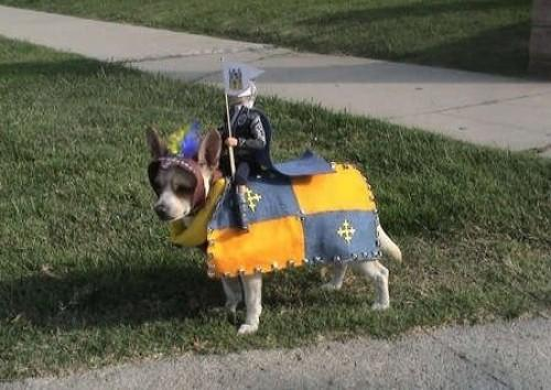 12-knight-and-steed-dog-costume