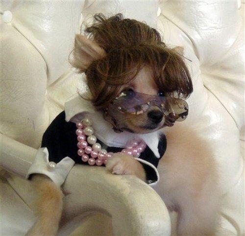 3-sarah-palin-dog-costume