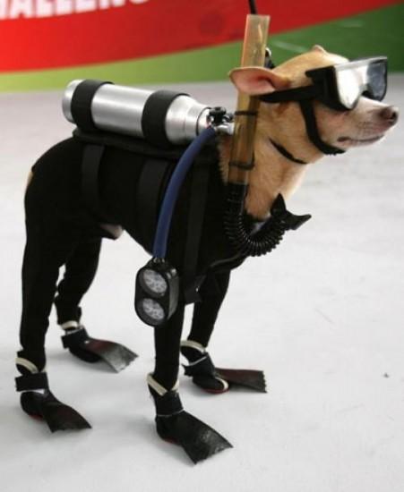 4-scuba-dog