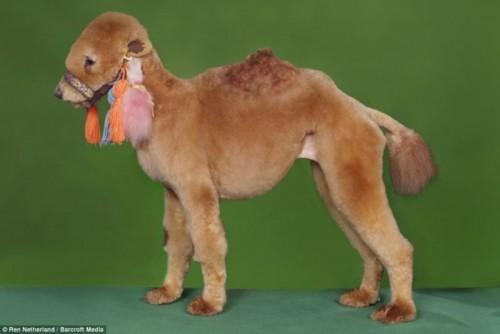 5-crazy-dog-costume-camel