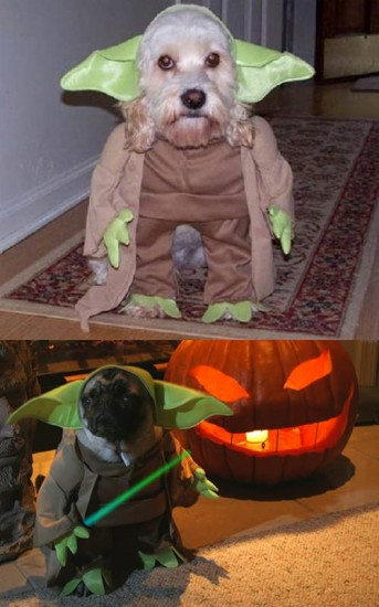 6-dog-yoda-costume-who-wore-it-better