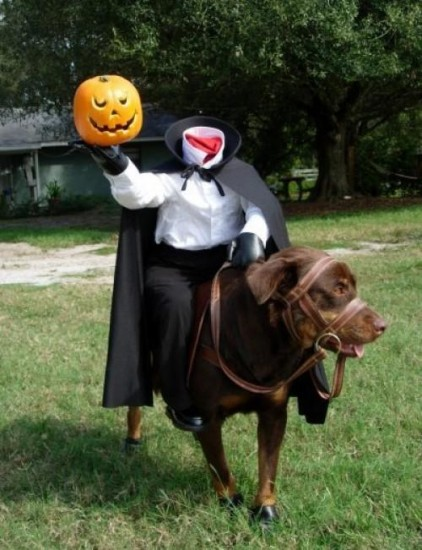 8-icabod-crane-dog-costume