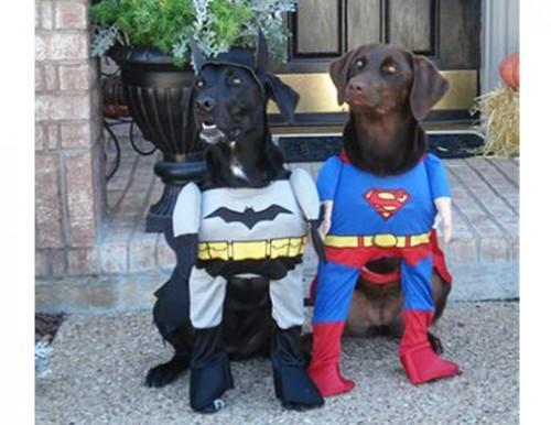 9-funny-dog-costumes-halloween-superheroes-af
