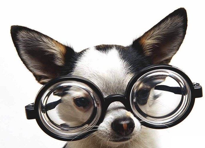funny-dog-with-glasses-animal-wallpapers