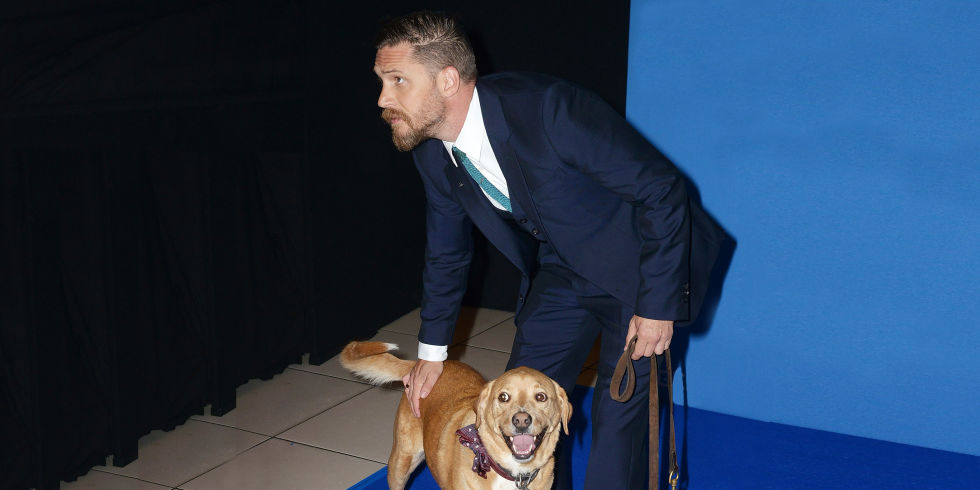 tom-hardy-dog