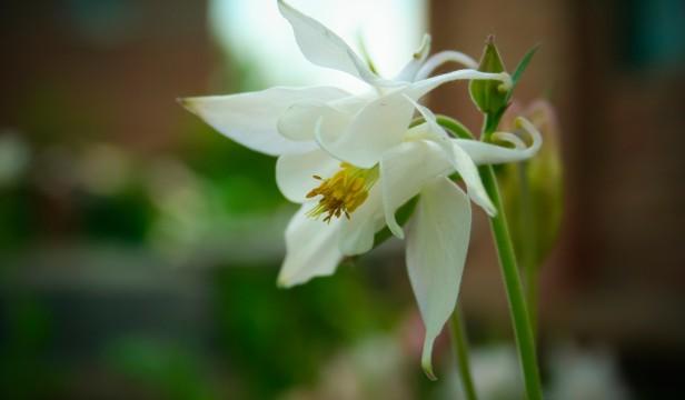 feng sui λουλούδια