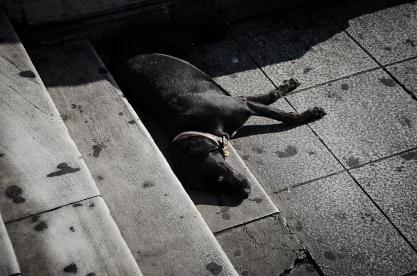 παγκοσμια ημερα αδεσποτων ζωων (11)