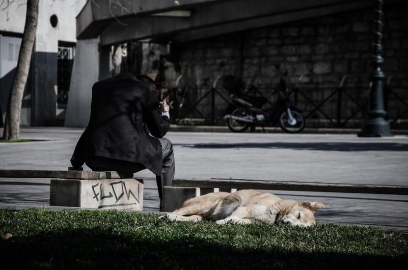 παγκοσμια ημερα αδεσποτων ζωων (12)