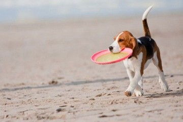 σκυλος διακοπες