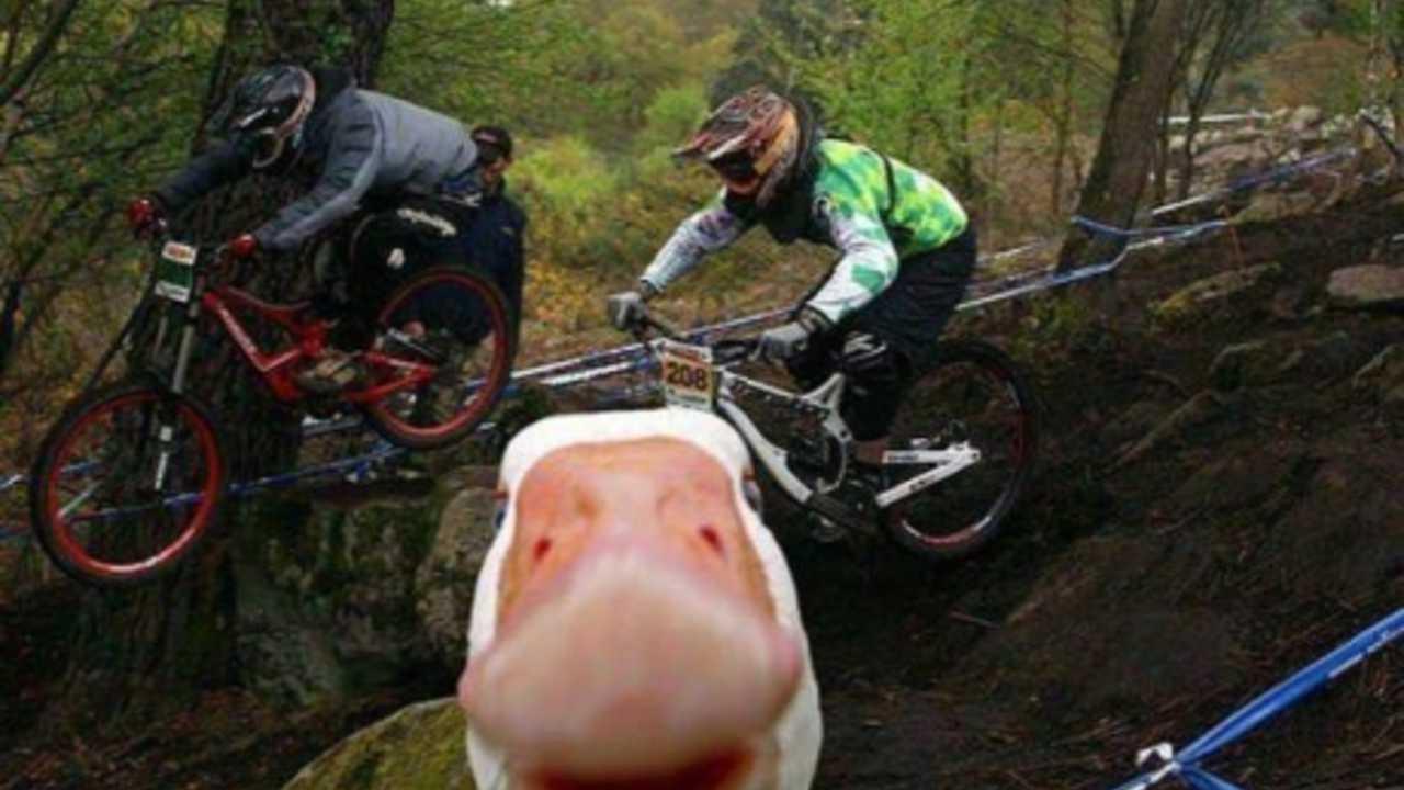 animal photobombs (3)