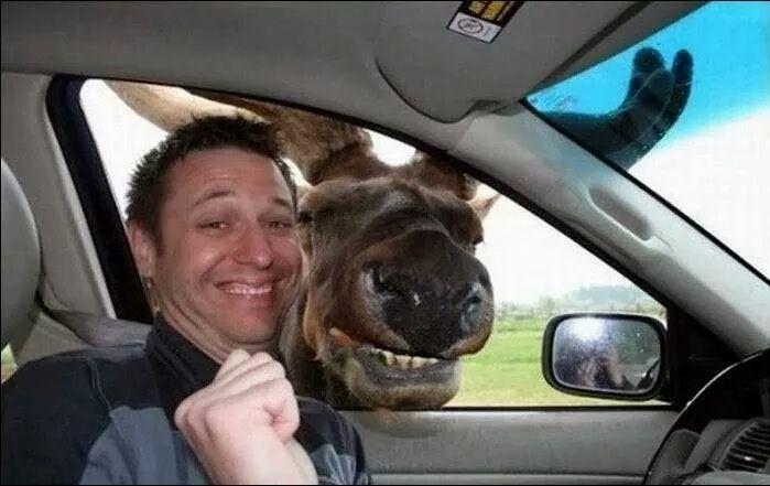 animal photobombs (7)
