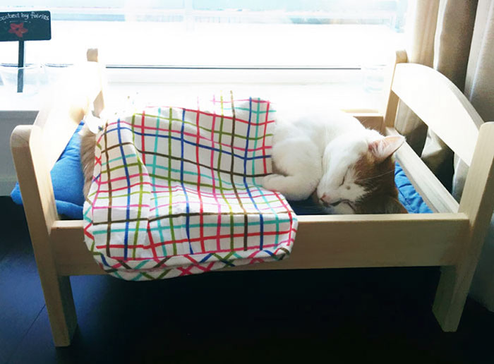ikea-donates-doll-beds-shelter-cats-7