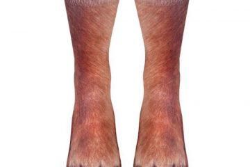 socks-animal-paws-1-593e8802d2e2d__880