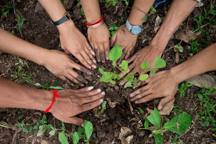 Tree-Planting-Cambodia-2014-Luc-Forsyth-50-1024x683