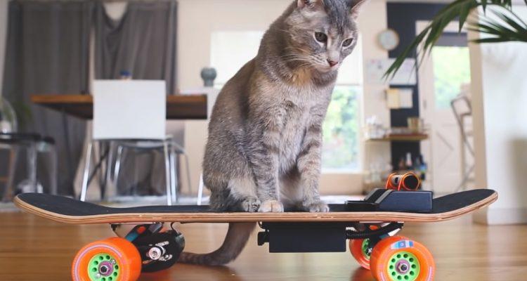 skateboard γάτα