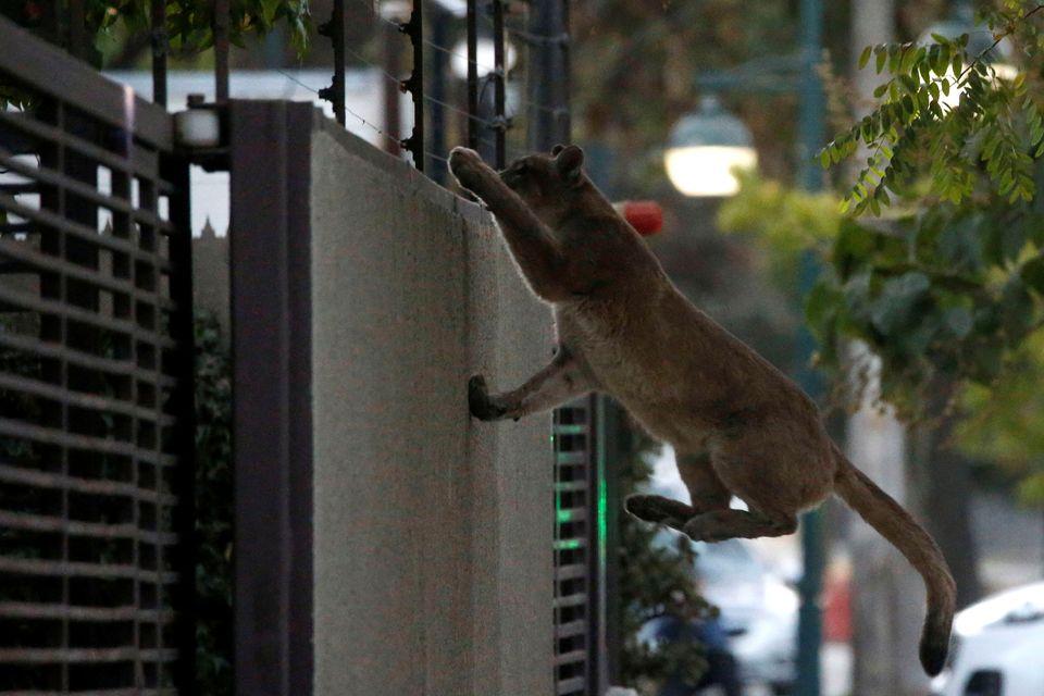 ζώα δημόσιους χώρους
