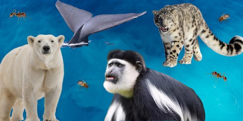 ζώα social distancing