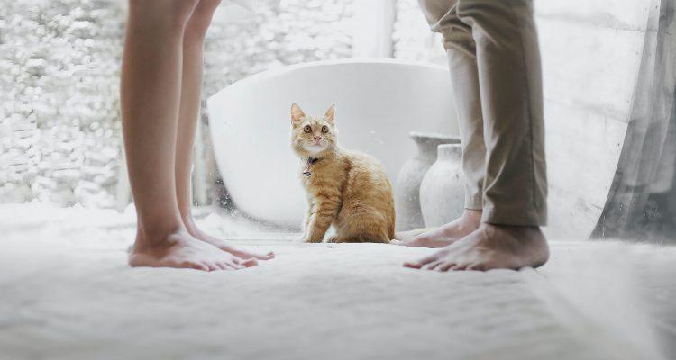 άντρες με γάτες