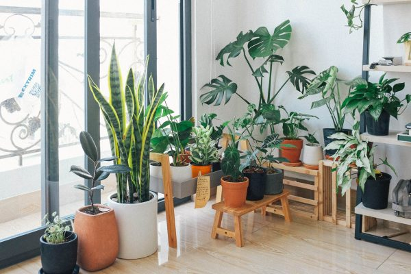φυτά αέρα